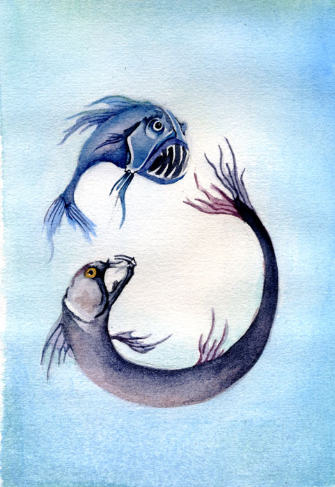 FIghting FIsh water color